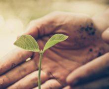 MAS : Projet horticole, les résidents s'engagent